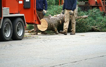 tree chopping service in williamson county illinois