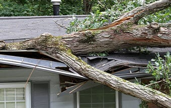 storm damage tree pickup services williamson county il
