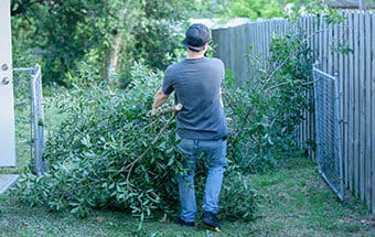 stump removal and land clearing williamson county illinois