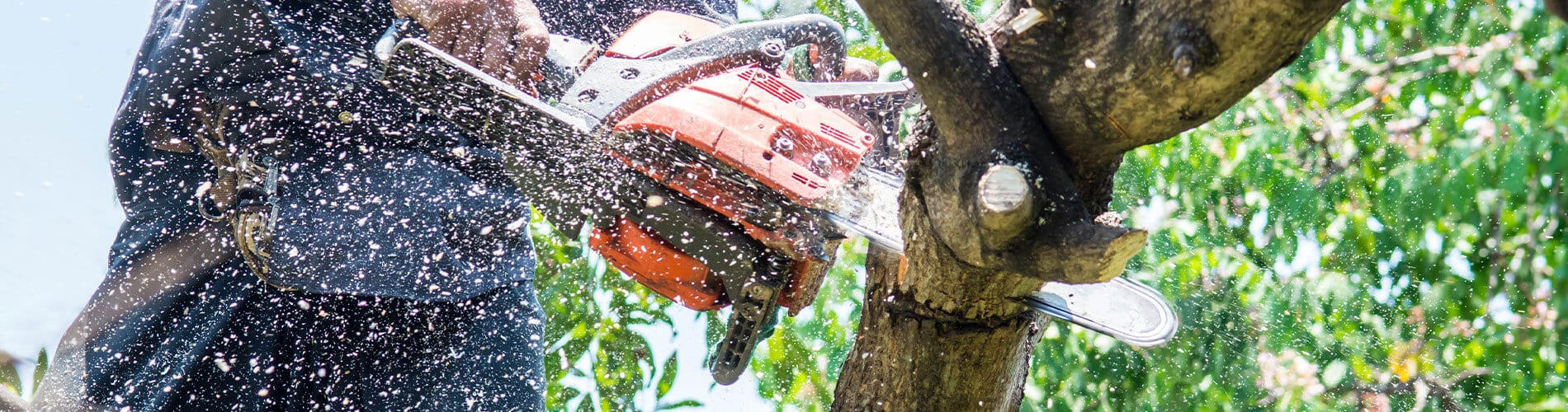 tree removal services near williamson county illlinois