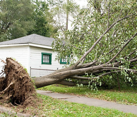 tree removal carbondale il