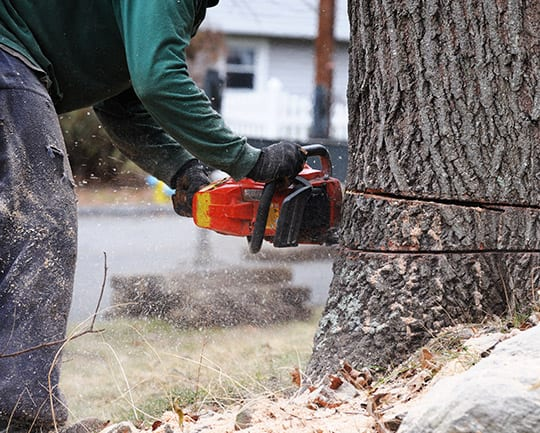 tree removal west frankfort il