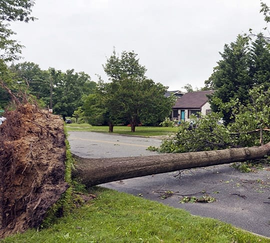 tree removal marion il